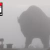 Dense fog advisory till 11-am Wed