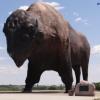 Buffalo statue sculptor on CSi TV 10