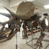 "Journey of ""Bob the Triceratops"", is lecture topic"
