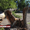 High winds causes power outages, downed trees