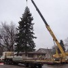Community Christmas tree now lit