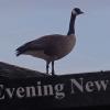 Wayne Byers Show – Evening – Oct 24