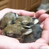 Reminder: Do not rescue ophaned baby animals