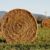 Emergency hay transportation expenses, reimbursement