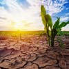 Drought Disaster Declaration counties listed