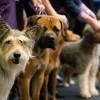 Dog Show, Ave Maria Village, Jun 12