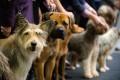 Dog Show planned, Jul 9, 2-p.m.