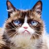 "Internet's ""Grumpy Cat"" passes"