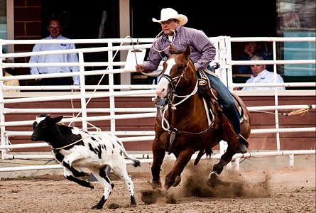Prca Rodeo At Ndws New Features