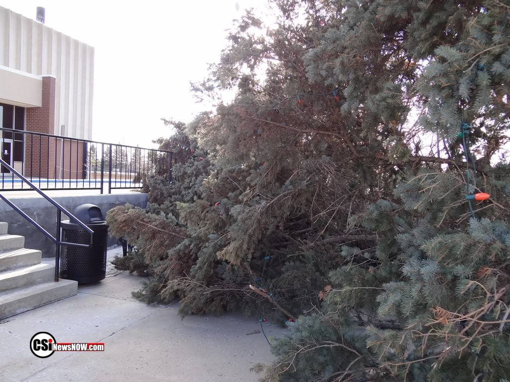 High winds take down Christmas Tree        CSi photos