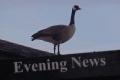 Wayne Byers Show – Evening – Jul 21